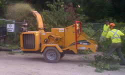 services-treeservice